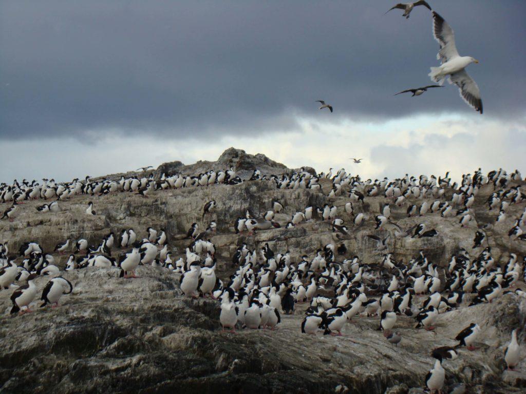 Isla de los Cormoranes, Canal de Beagle, Argentina, Elisa N Viajes