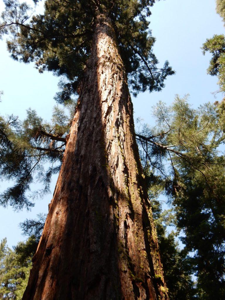 Yosemite National Park, Road trip, California, Arizona, US, Elisa N, Blog de Viajes