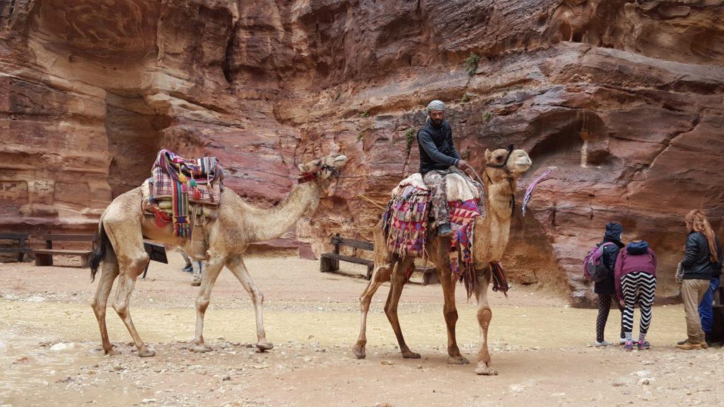 Camellos, Petra, Jordania, Jordan, Elisa N, Blog de Viajes Argentina