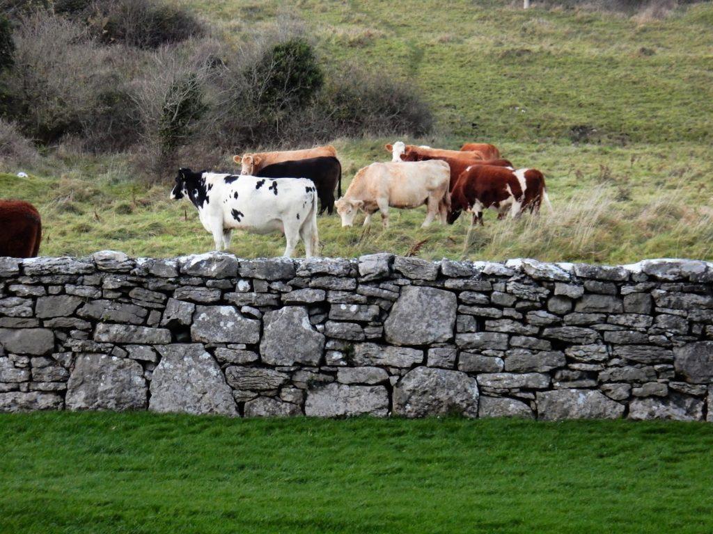 Irlanda, The Burren, Elisa N, Blog de Viajes, Lifestyle, Travel