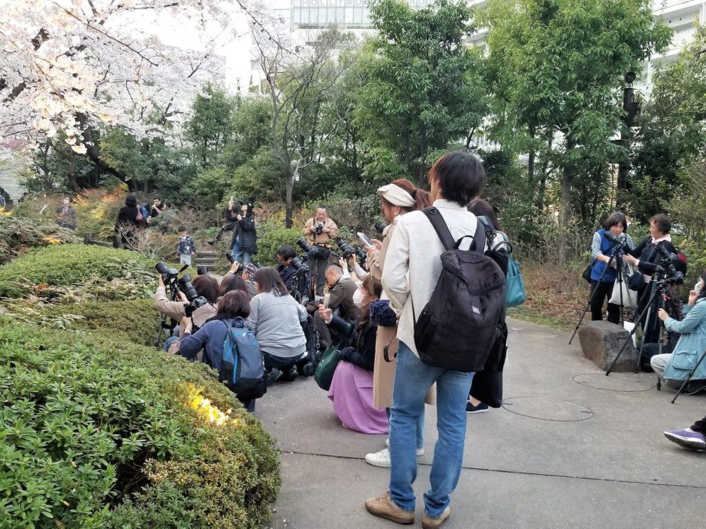 Fotógrafos tratando de capturar los cerezos en flor, Tokio, Japón