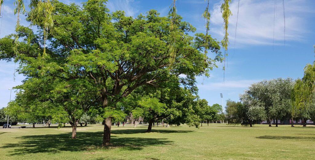 Arboleda, Parque Scalabrini Ortiz, Rosario, Argentina