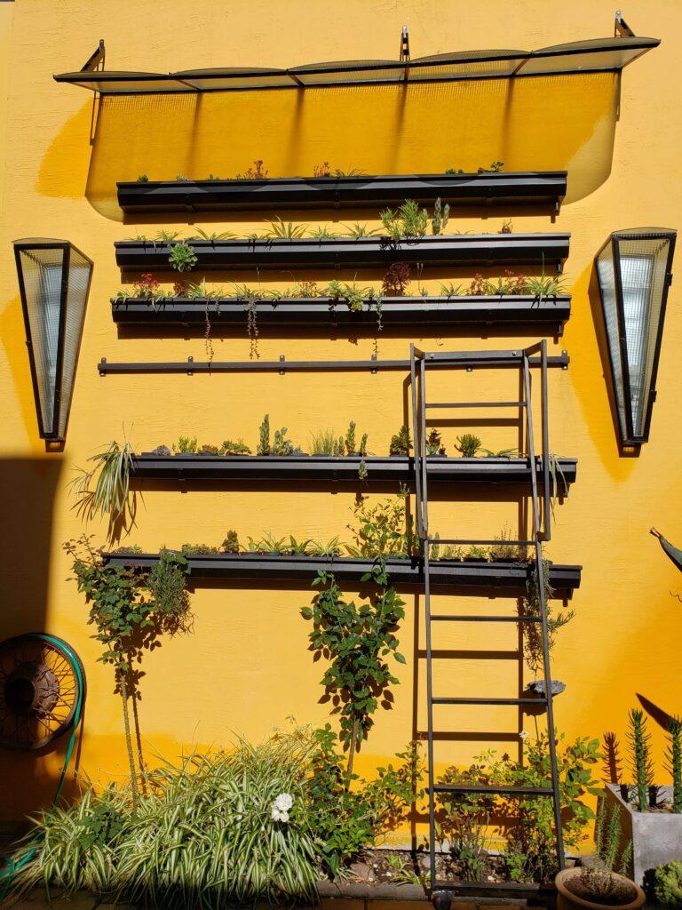 Jardín vertical de mi casa en Rosario, Argentina