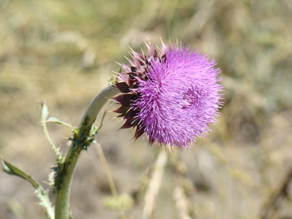 Patagonia Argentina en flor