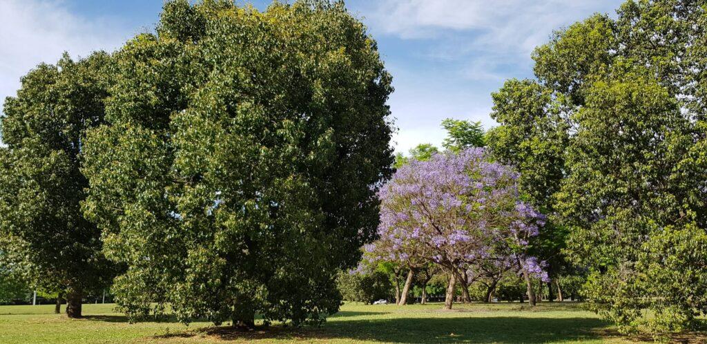 Parque Scalabrini Ortiz, Rosario