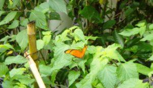 Lee más sobre el artículo Jardín de verano en La Recoleta