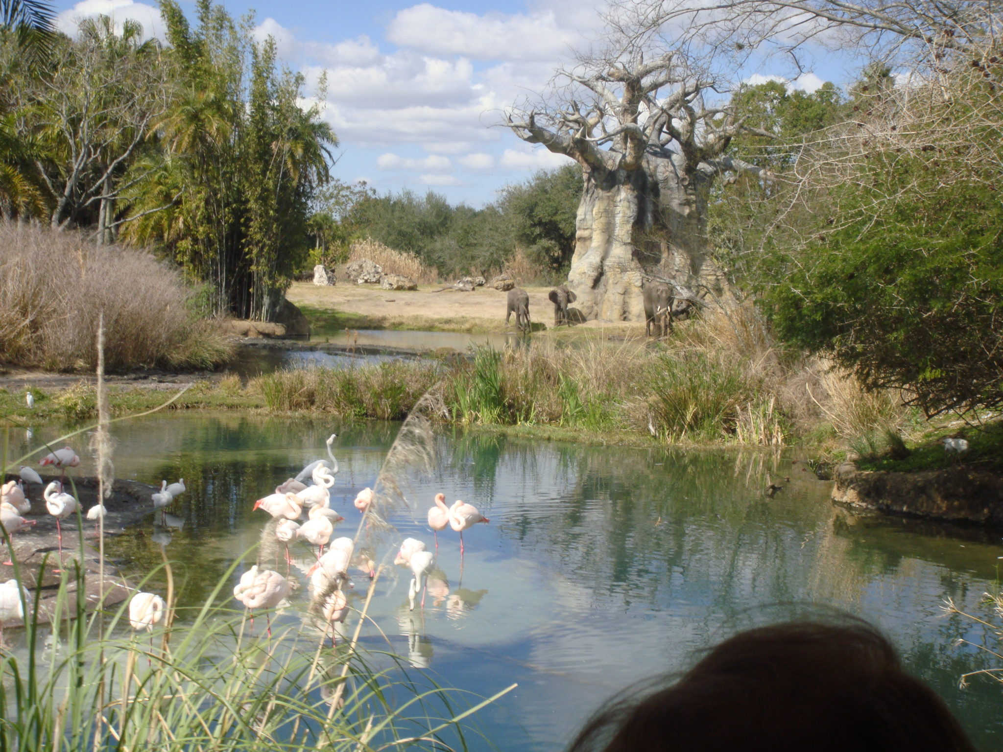 Animal Kingdom en el mundo de Disney