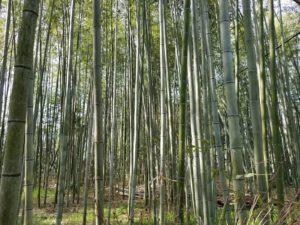 El bosque de bambú de Arashiyama, uno de los mejores recuerdos de Japón