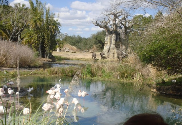 Animal Kingdom, Disney, Florida