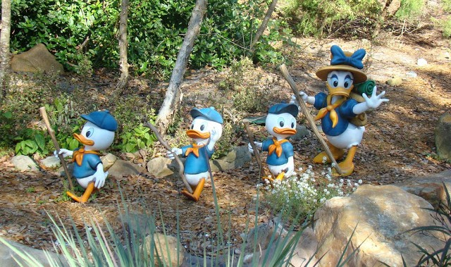 Donald y sobrinos, Animal Kingdom, Disney, Florida
