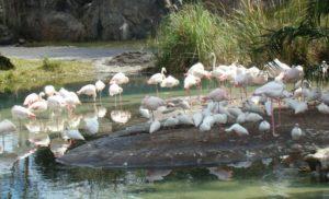Paseo por la selva en Animal Kingdom Orlando