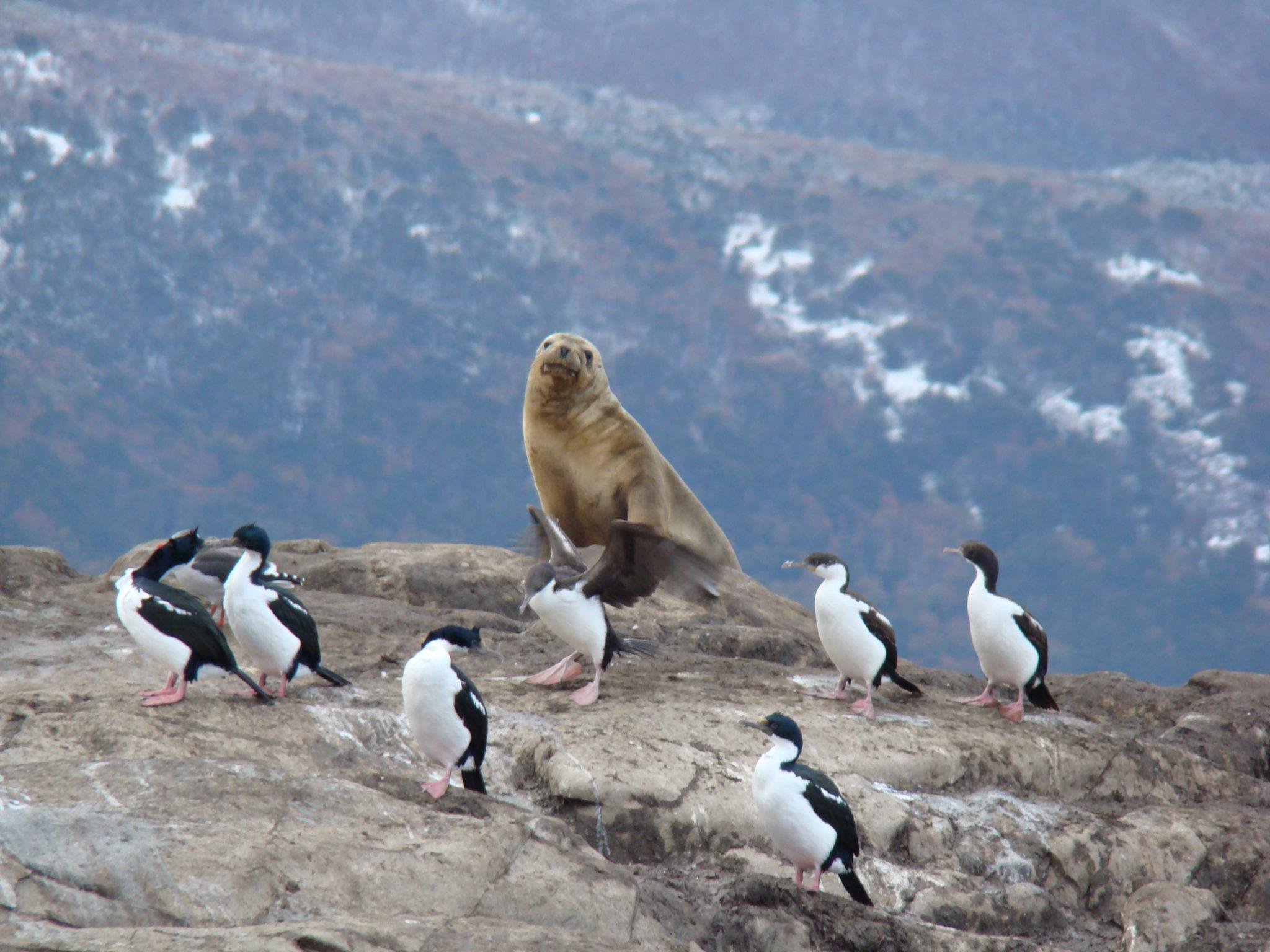 Lee más sobre el artículo Isla de los Cormoranes en el Canal de Beagle