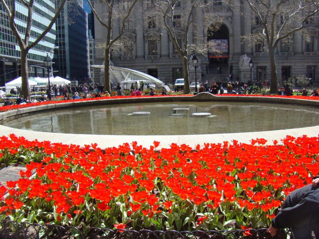 Tulipanes en Bowling Green, Distrito Financiero, Manhattan, Blog de Elisa N