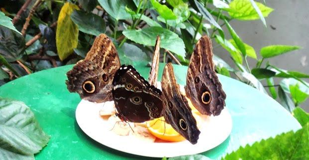 Schmetterlinghaus, casa de mariposas en Viena