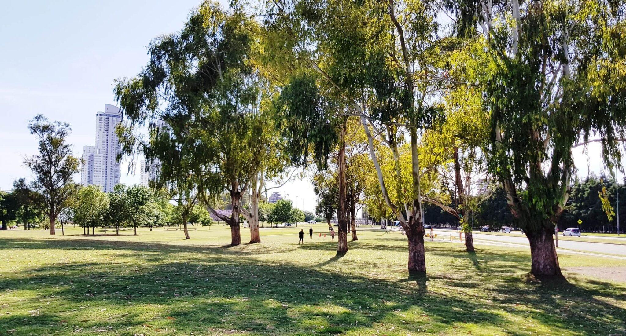 Lee más sobre el artículo La alegría de ver el árbol